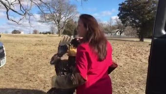 Dickerson Park Zoo releases bald eagle back into the wild
