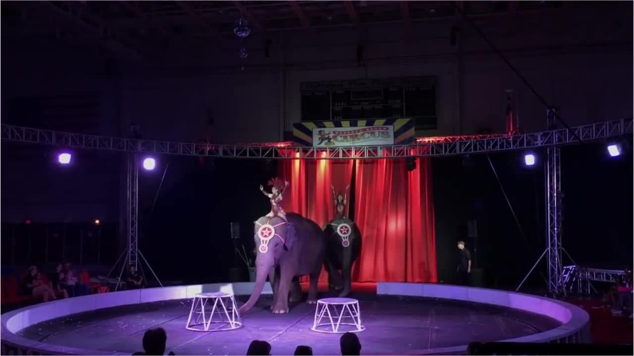 Elephants beaten, debts outstanding and a gunshot. How does this circus come to town?