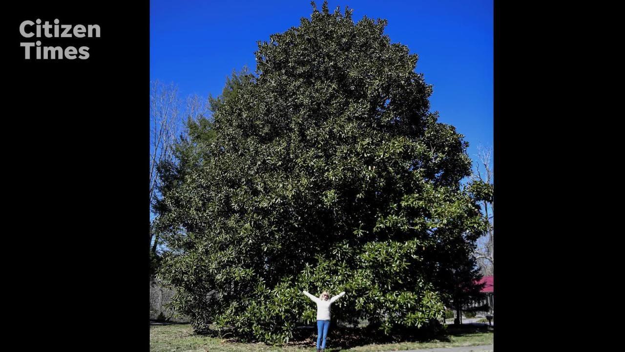 Honoring Ashevilles Trees