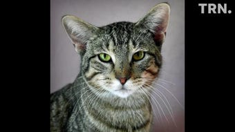 Winnie and Templeton are available for adoption at the Humane Society of Wichita County.