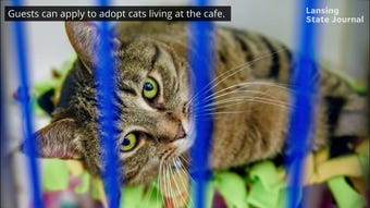 Efforts are underway to bring cat cafes to Lansing. Here's what they might look like.