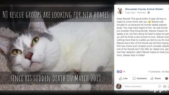 After pro wrestler King Kong Bundy's death, his cats need new homes
