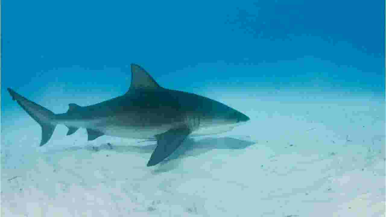 Sharks commonly found in Florida's waters