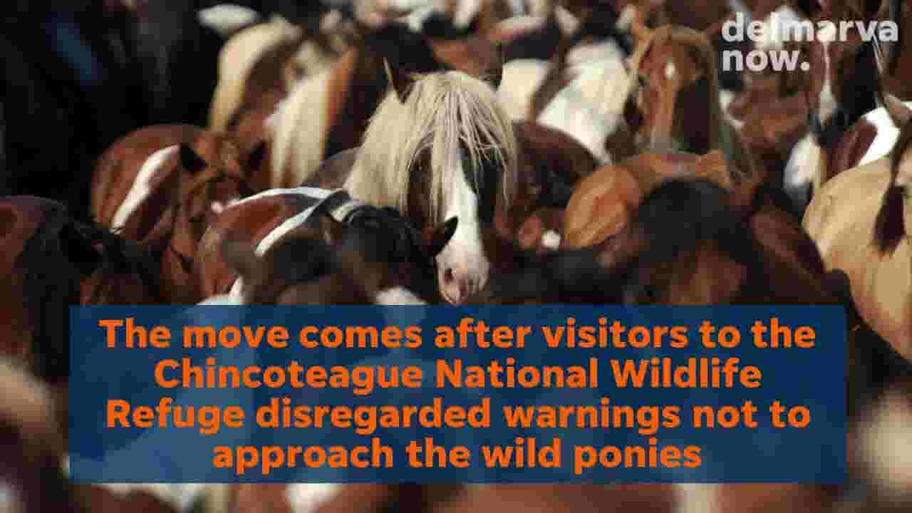 WATCH: Riptide, other ponies get penned in new temporary home