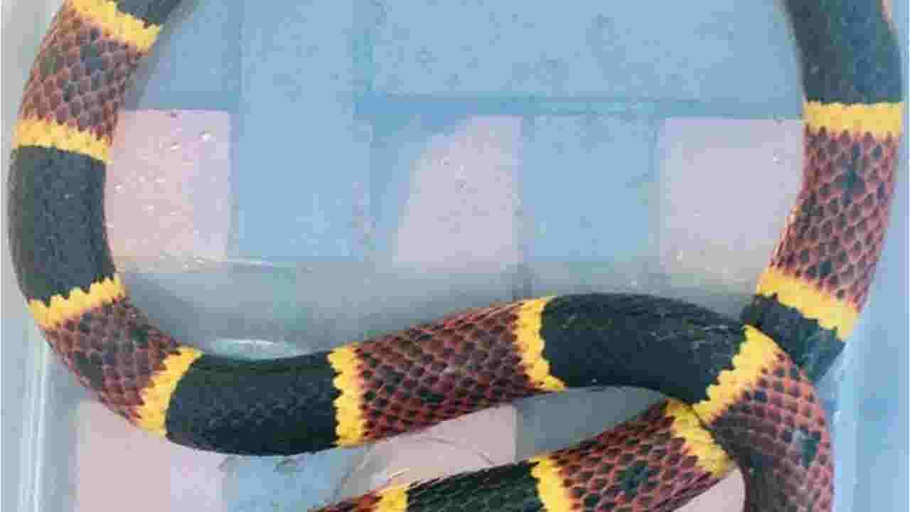 Woman surprised by 2-foot coral snake in her yard