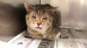 The Animal Rescue League of Iowa said 26 cats were rescued from a one-bedroom Des Moines apartment Tuesday, April 23, 2019.