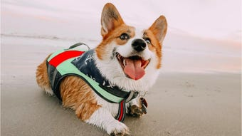 Corpus Christi resident Alissa Bowman organized a huge corgi play date at the beach. The event is set for June 15, 2019.