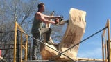 Artist Jarrett Dahl carves an eagle into a tree trunk in Sioux Falls the week of April 22.