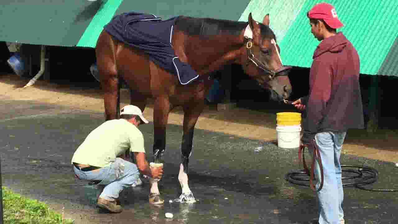 Maximum Security 'wasn't the same horse,' trainer says he may need time off