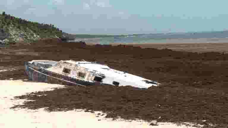 Stinky seaweed threatens Mexico's pristine beaches