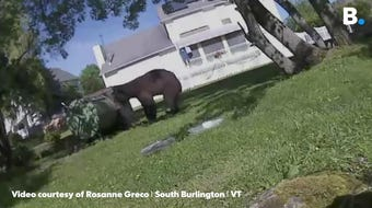 A black bear was caught on video at a home on Vale Dr. in South Burlington on Sunday, June 9, 2019, trying to get into a compost barrel.