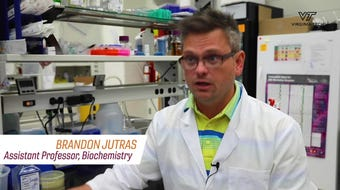 Breakthrough paves way for new Lyme disease treatment, as discussed in this video provided by Virginia Tech.