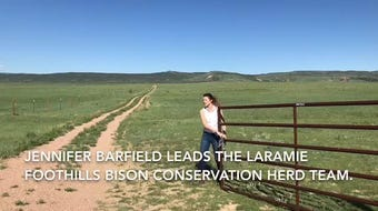 The Laramie Foothills Bison Conservation Herd in Northern Colorado has done so well that some animals are given away.