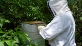 Beekeeper Shannon Bigham talks about his family's honey business at Willow Blossom Farm in Dimondale.