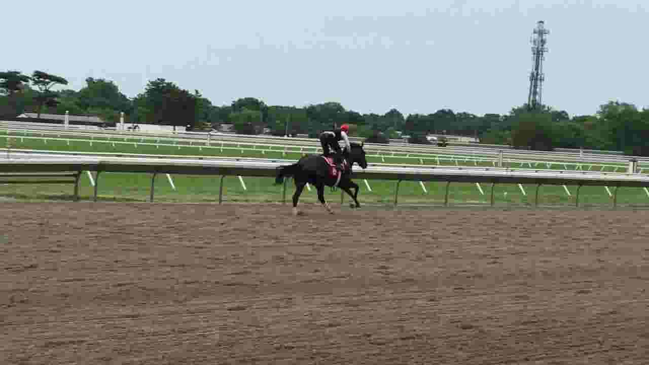Haskell 2019: Joevia preps for Monmouth Park's big race
