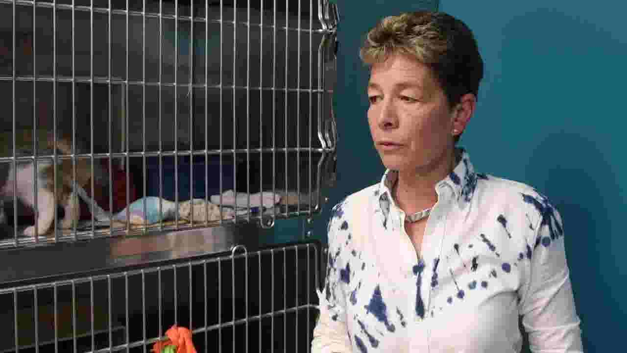 WATCH: Millville cat set on fire makes full recovery
