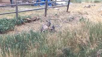 On July 11, around 5 p.m., a doe gave birth. The baby stayed close to its mother for quite sometime before it stood up to take a look around.