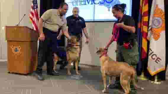 East Valley animal shelter owner indicted following MSCO investigation