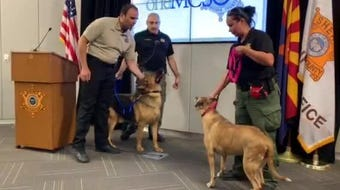 During a press conference Thursday Maricopa County Sheriff Paul Penzone introduced recovered Shelter Paws dogs.