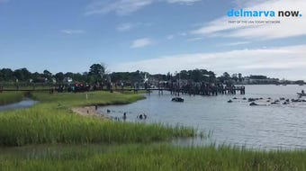 The crowd goes wild as the first of the Chincoteague ponies emerges from the water. The swim took just under four minutes.