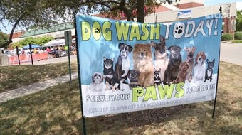 Hear from Tracy Reiten, a Realtor at Lepic-Kroeger, speak about the annual dog wash.