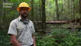 Touring the Twelve Mile Timber Project area in Harmon Den.