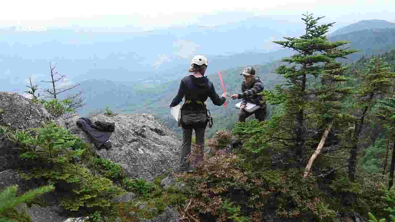 Parkway, US Forest Service, US Fish & Wildlife join to protect climate change-endangered plant