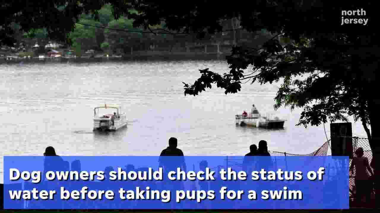 Keep your dogs safe: Toxic algae found in NJ lakes can kill canines