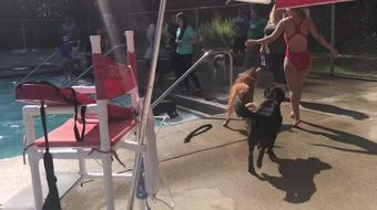 Port Huron parks and recreation officials decided to end the summer at Sanborn Pool on Wednesday, Aug. 14, 2019, with an event just for dogs.