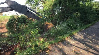Trees are being removed only a few feet from the Frisco Highline Trail.