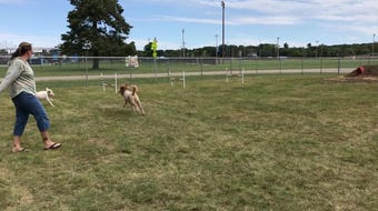 Dogs and their humans enjoy the new Home Run Dog Park in Battle Creek, Mich.