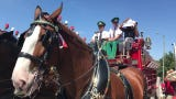 Video of Budweiser Clydesdales at Celebrate Anderson