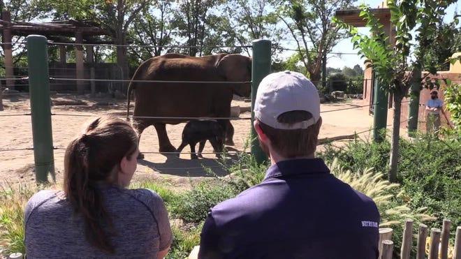 Louisville Zoo debuts African elephant Mikki's calf