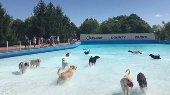 The annual dog swim at Waterford Oaks Waterpark draws pets from around metro Detroit on Saturday, Sept. 7, 2019.