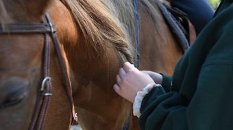 Horses and humans heal together at Hidden Ponds Horse Rescue in Coldwater, Mich.