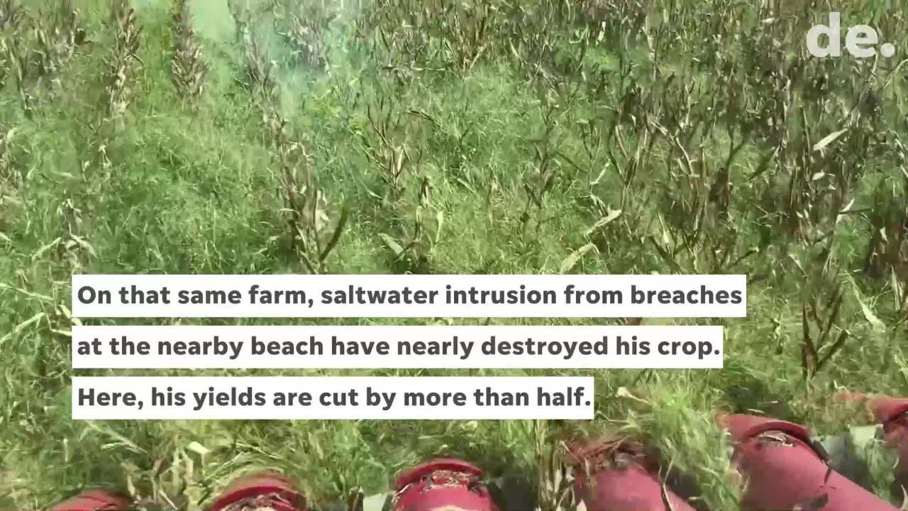 Raw video: How salt impacts Delaware farmland
